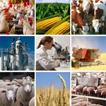 agribusiness recruitment and staffing service agency