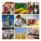 Grow Labor agribusiness recruitment and staffing service agency